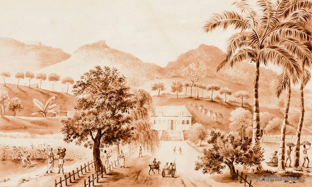 Jean-Frédéric Bosset de Luze: Kaffeeplantage Leopoldina, Aquarell auf Papier / zVg: Johann-Jacobs-Museum