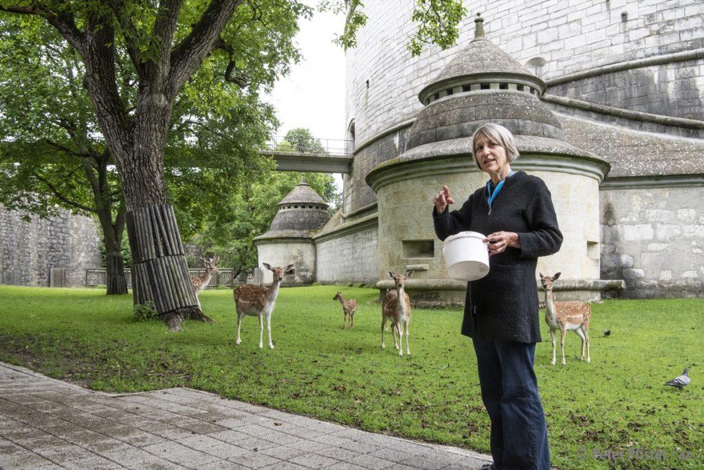 Die Munotwächterin mit Junghirsch Peter und seinem Harem. Zweimal am Tag werden die Hirsche gefüttert.